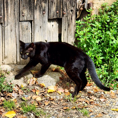 #instacat #cat #pets #instapets #animal #canon #canonphotography #black #blackcat #photooftheday #photodujour