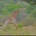 Patches of Colour. by LC's Eye (Wild Images of Africa)
