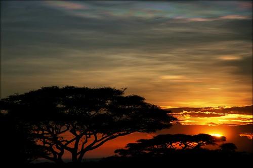 africa morning trees sky nature silhouette sunrise tanzania safari morningglory acacia gamedrive ndutu lakemasek lakemasektentedlodge