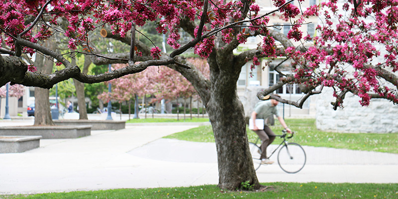 The warmth of May coaxes a colourful array of blossoms from the trees around campus! (Photo by Charis Ho)