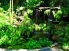 ~Oct 2009 Fairchild Gardens #6~