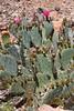 My Six Square Feet of Sonoran Desert