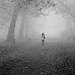 Fog Walk by Torsten Reimer