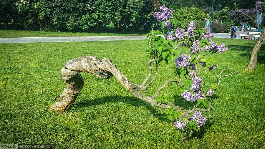 10-LilacGarden
