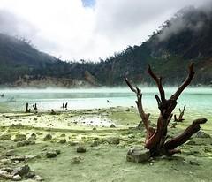 Kawah Putih #KawahPutih #bandung #WestJava #Crater #iphonephotography #indonesia #beautifulindonesia #wonderfulindonesia #yejianhong