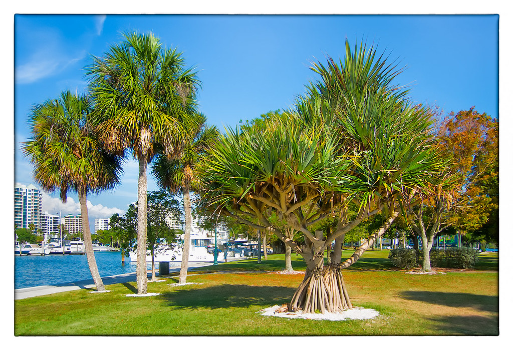 Retire in sarasota overview for Best places to retire in florida