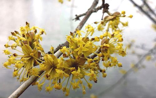 Yellow Blossoms On A Beautiful Sunday