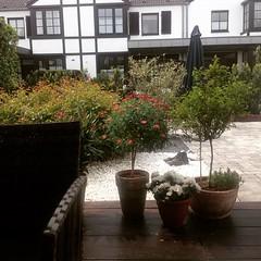 És grünt - der Sommer kann kommen #Bonn #Duisdorf