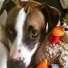 I love my #birddog #mutt #fannypup