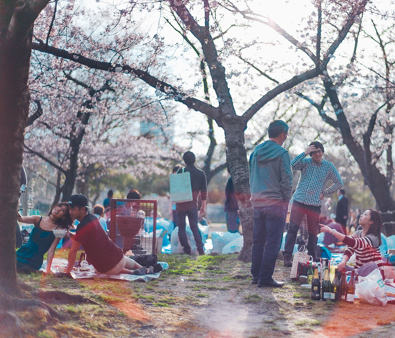 10.Roaming Under The Cherry Blossoms.