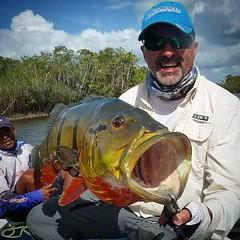 Tucunare Açú fisgado no Rio Negro, região de Barcelos-AM. O mais cobiçado pelos estrangeiros.  #pescaamadora #pesqueesolte #baitcast #fly #pescaesportiva #sportfishing #fishing #flyfishing #fish #bassfishing #bass #pescador #pescaria #tucunare #pavone #pa