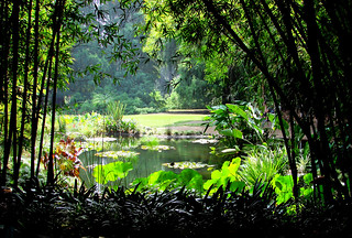 Sunrise on Lilly Pond, Huntington Library 9-08
