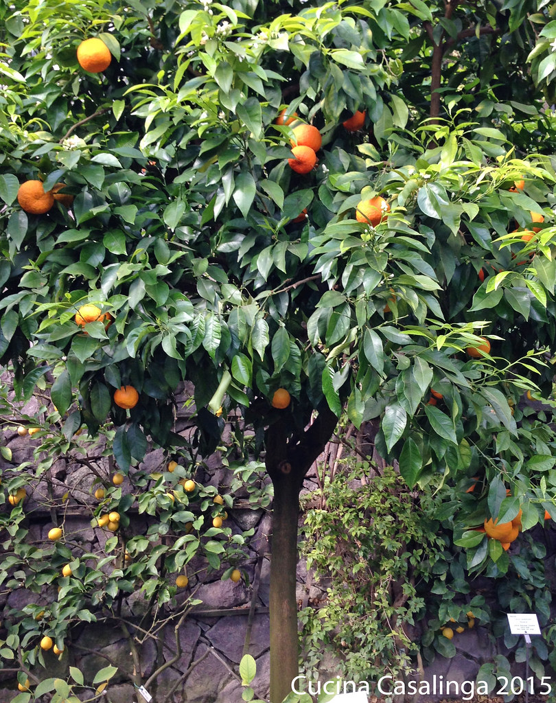 Trauttmansdorff Orangen
