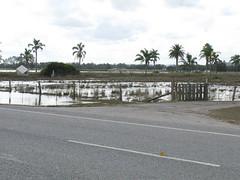 Raymond Terrace flooded26