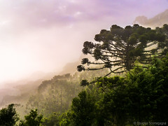 Santa Catarina, south Brazil