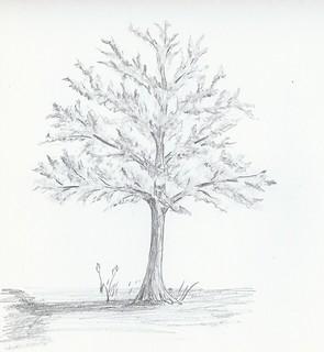 Study_Trees_4