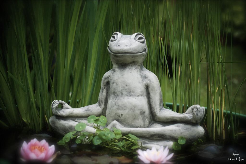 Momento Zen!