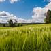 Felder, fields