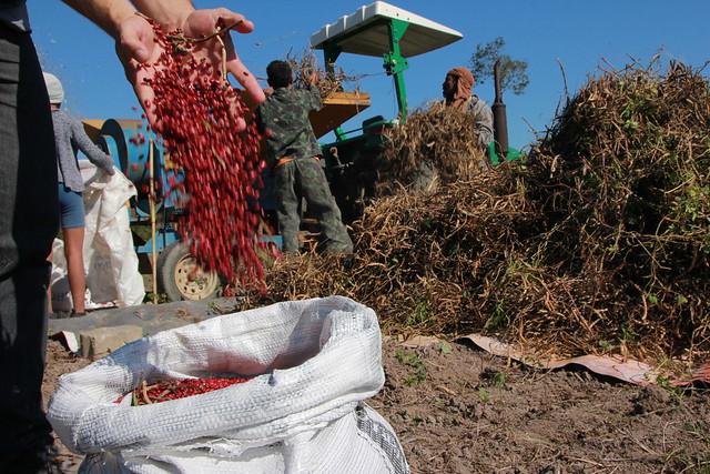 A área plantada com feijão, o vilão do momento, diminuiu 36% desde 1990, enquanto a população aumentou 41% - Créditos: Divulgação