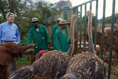 U.S. Secretary of State John Kerry looks at a pair of ostriches - Pea and Pod - and a blind rhinoceros named Maxwell at the Sheldrick Elephant Orphanage in Nairobi National Park in Nairobi, Kenya, on May 3, 2015, following a wildlife tour of the Park and before a series of government meetings. [State Department Photo/Public Domain]
