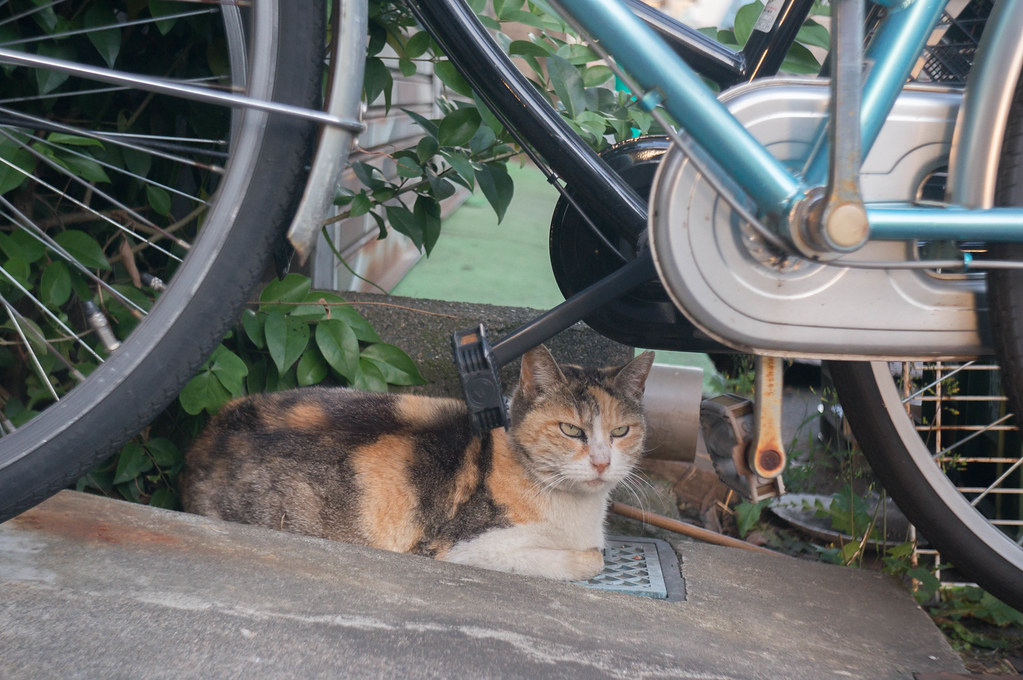 自転車と目付きの悪い猫