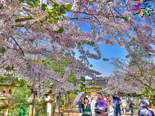 Spring in Tokyo=15
