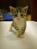 Office Kittens_01
