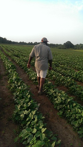 Small grower Warren Ford in a field