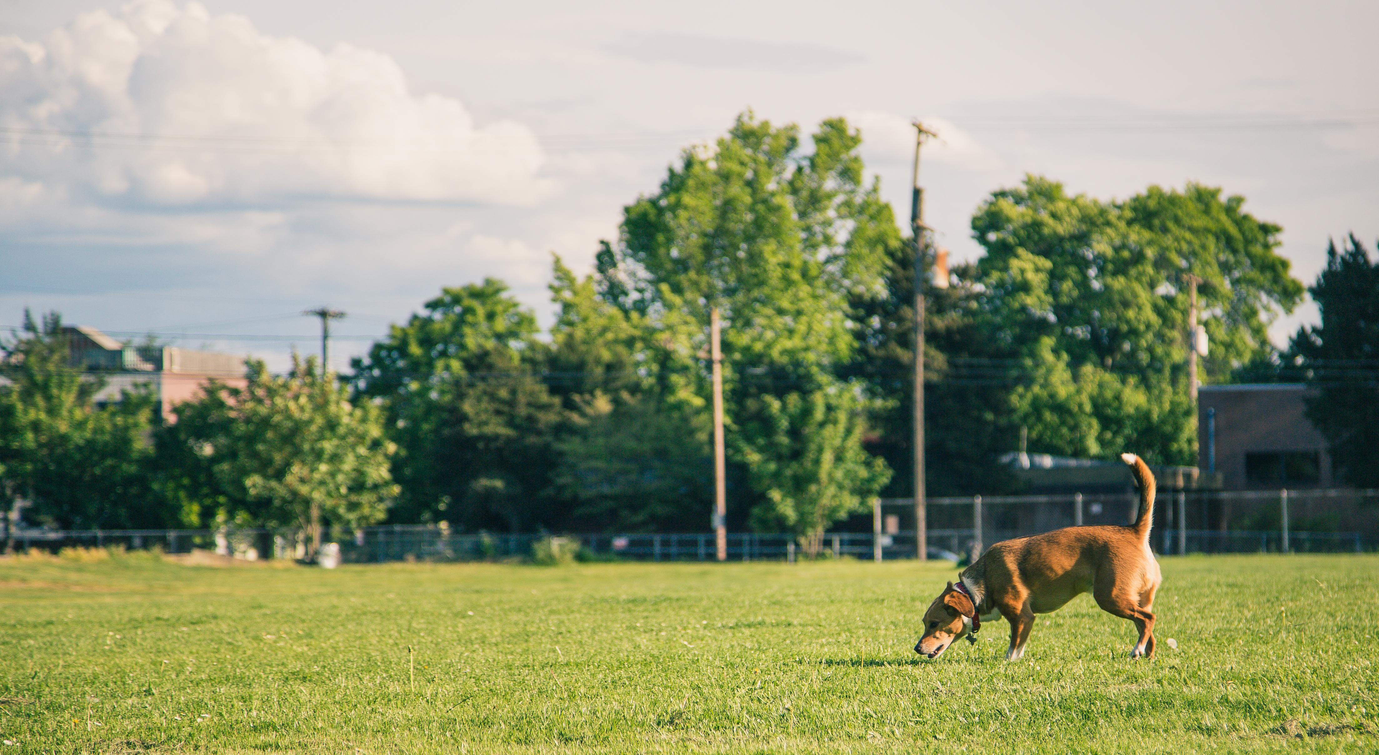 Dog Park Webster Tx