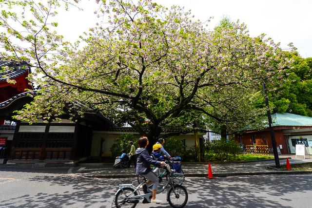 Photo:東京大學 赤門 By Jackal.M