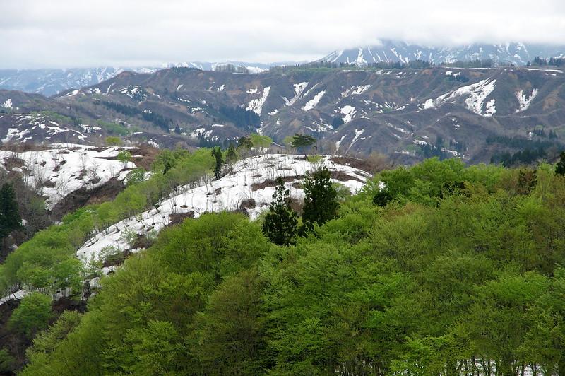 残雪と新緑_201504_NO2
