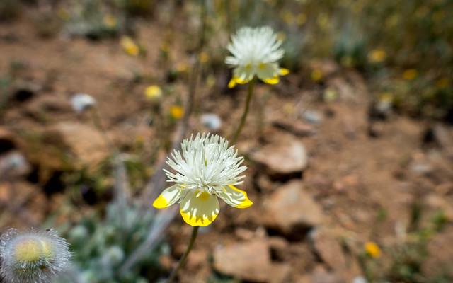 Mystery flower, m663