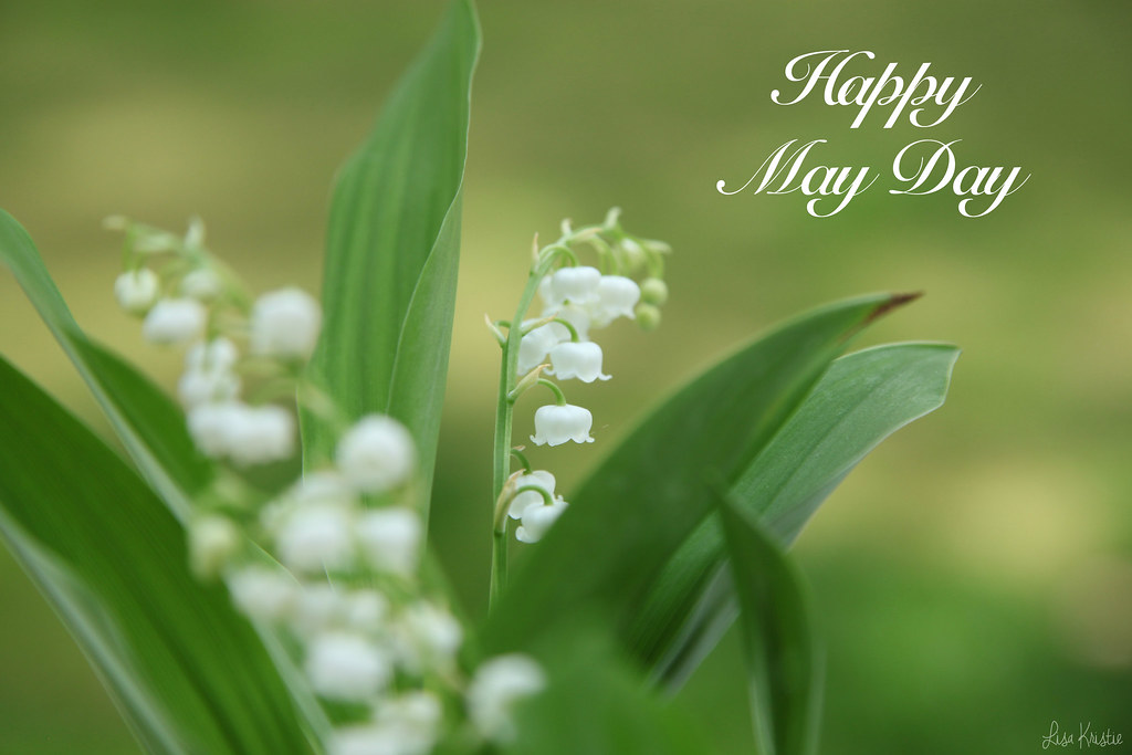 may day lily of the valley lilly flowers white flower bells holiday french labor day celebration europe european plant muguet premier 1er mai fête du travail congé