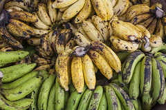 plant(0.0), cucurbita(0.0), vegetable(1.0), cooking plantain(1.0), banana(1.0), produce(1.0), fruit(1.0), food(1.0),