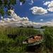 de grote bloem, Huissen by nldazuu.com