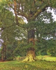 Afternoon Oak  #iphonephotography #relightapp #vsco #mexturesapp #rookieapp #nature #naturelovers #naturephotography #natureaddict #natureshots #naturesbeauty #naturegram #northcarolinanature #pixelpanda #rsa_nature #rsa_landscape #rsa_mextures #rsa_natur