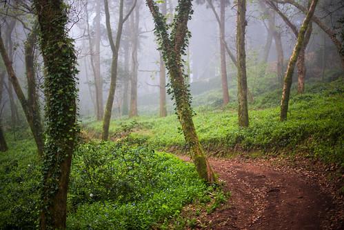 wood green portugal fog canon way path lisbon sintra 6d 2015 canonef50mmf14usm