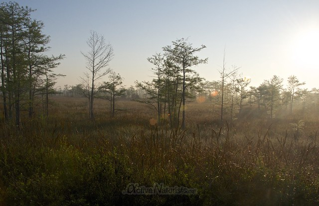 view 0001 Gator Hook Trail, Big Cypress National Preserve, Florida, USA