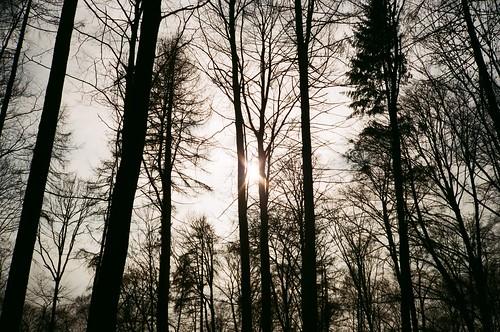 Stille Wald