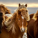 Icleandic Horses by dpe3x