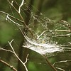 Spider web #arachnid #spider #nature
