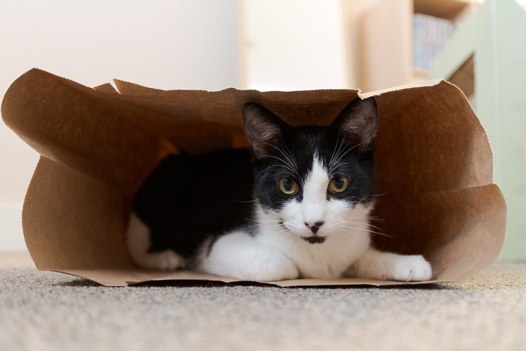 Our kitten Boo playing inside a paper bag the day after we adopted him