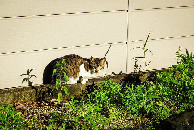 Today's Cat@2016-05-15