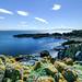 Isle of May - Scotland
