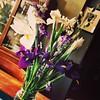 Irises #hantzhouse