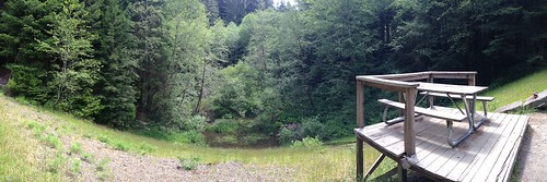 Arcata Community Forest by mikey and wendy