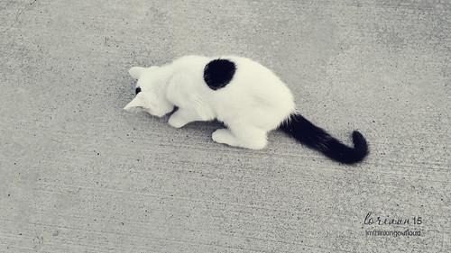 little kitten... by im thinking outloud