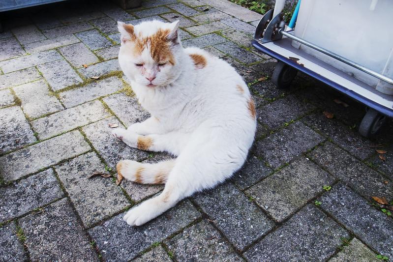 お猫さま-20160425-6