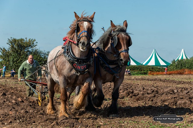 Festival of the Plough 2016 ,Epworth, 18-9-2016