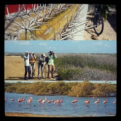 #Bonaire. Vainas raras de esta isla:  1. Usan cactus como proteccion de las casas.  2. La isla es tan arida que todo mundo esta contento que venga un huracan con sus lluvias a remojar todo despues de 5 años de sequía. 3. Hay flamingos en cada charco. So